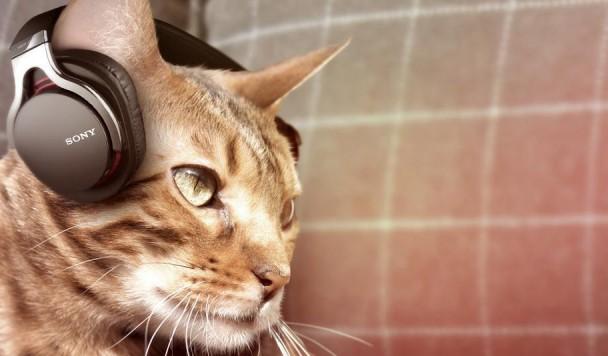 Электронный измеритель кошачьего счастья и еще 5 новостей из мира IT, которые нужно знать сегодня