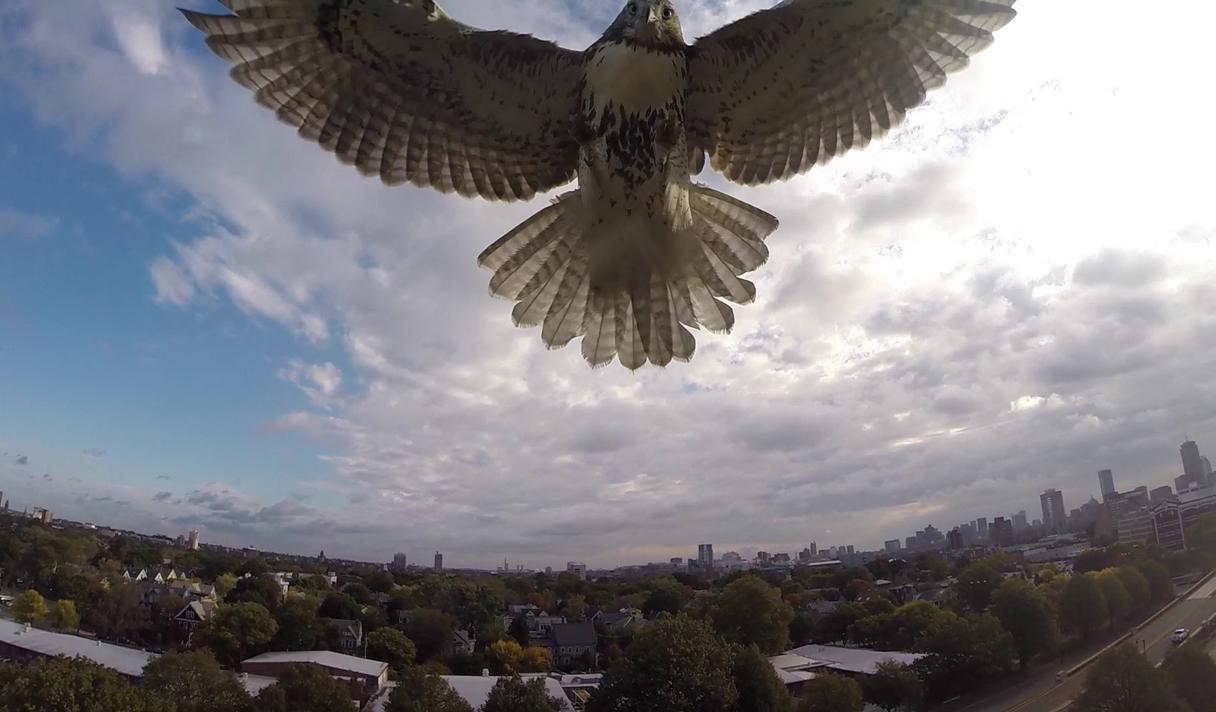 Птичья охота на дроны и еще 5 новостей из мира IT, которые нужно знать сегодня