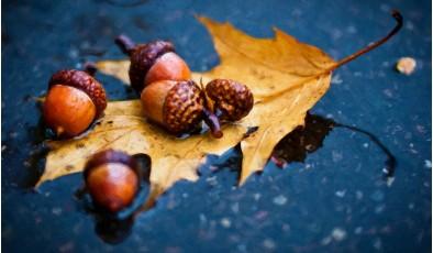 Вещи, которые можно выгодно купить осенью