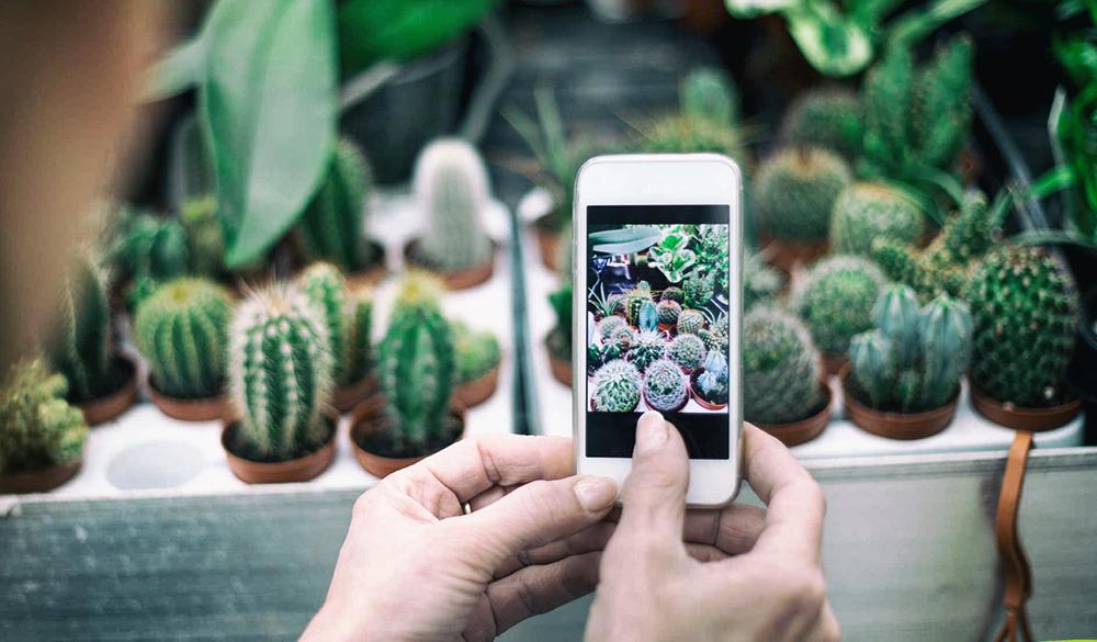 6 полезных приложений для садоводов