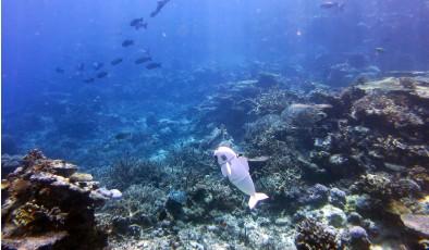 Как искусственная рыбка помогает изучать океан