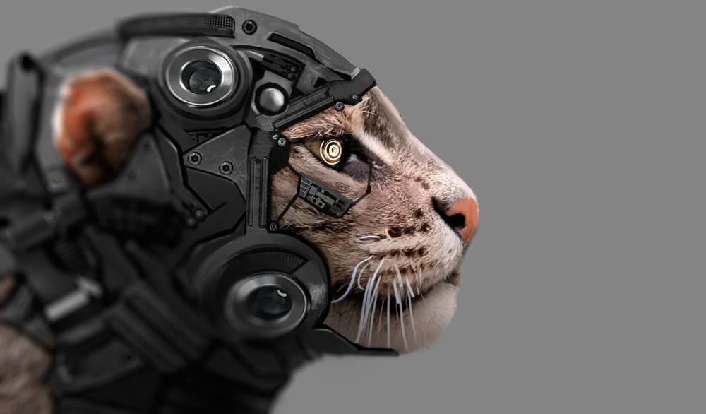 Как живую кошку хотели превратить в киборга-шпиона