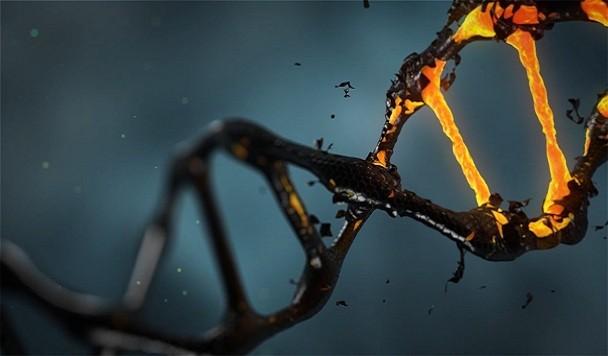 Ученые нашли первое бессмертное существо