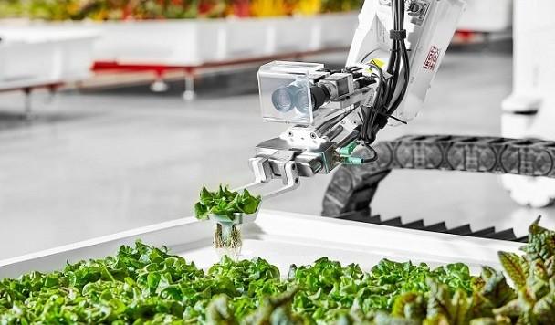 В Калифорнии создали робосистему, самостоятельно выращивающую растения