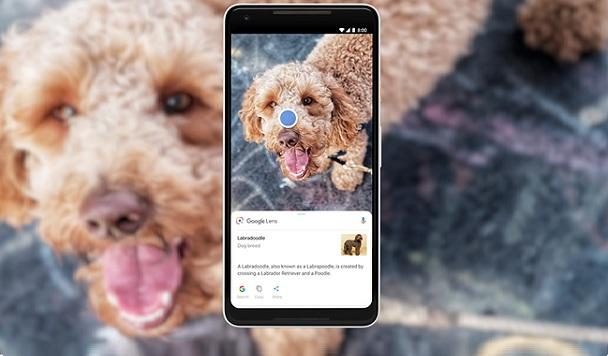 Google Lens распознает уже миллиард объектов