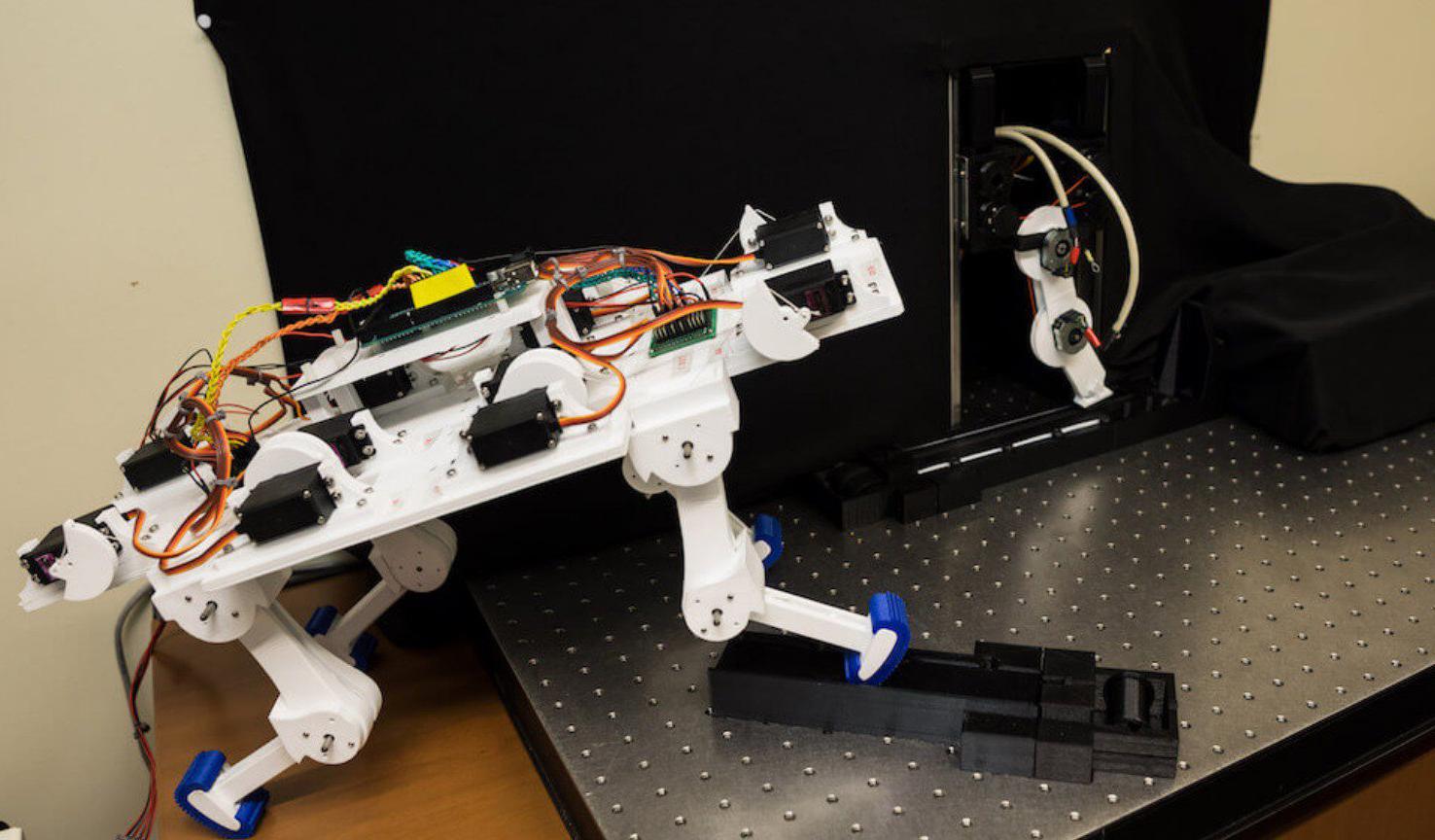 Робот за пять минут научился ходить и выработал уникальную походку