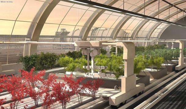 Грузинские ученые планируют выращивать виноград на Марсе