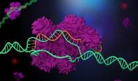 США впервые официально генетически модифицировали человека