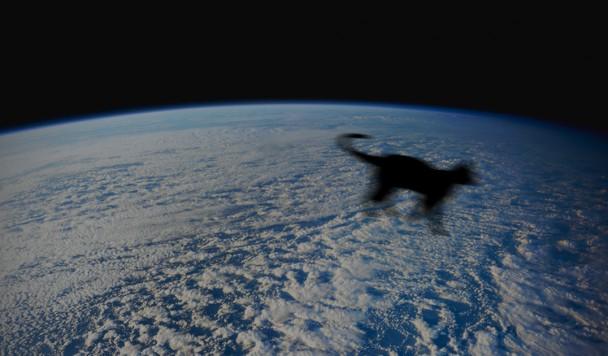 Мёртвый кот по имени Пикачу отправится в космос
