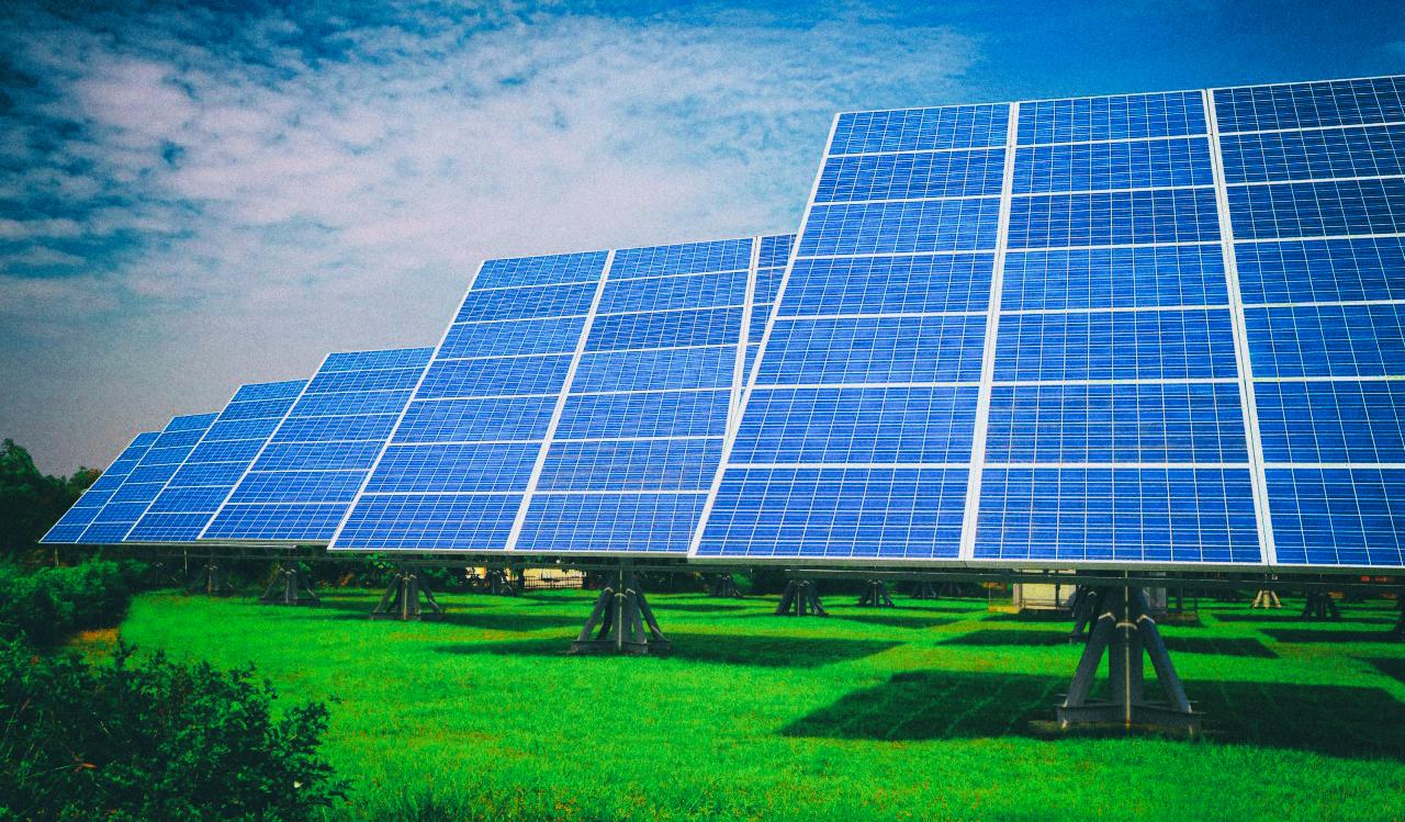 Парки солнечных батарей полезны для живой природы