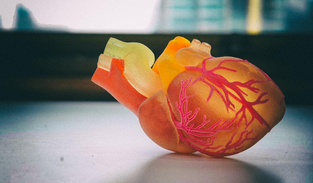 """Ученые смогли напечатать на 3D-принтере рабочие """"запчасти"""" для сердца"""