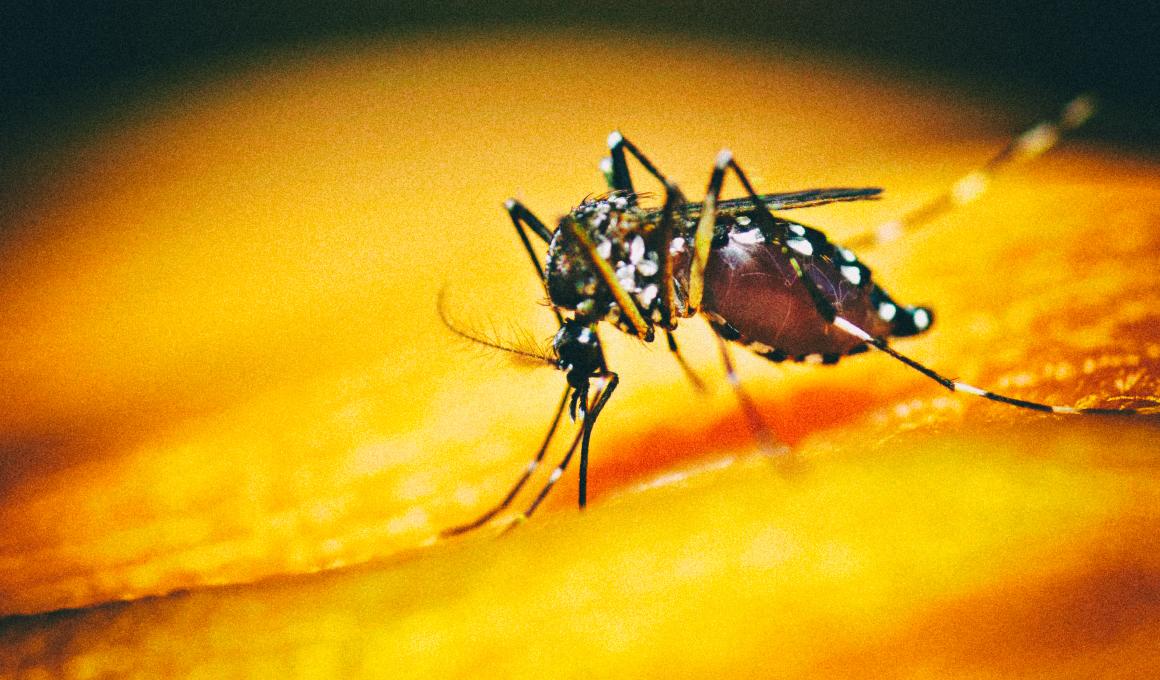 Ученые случайно вывели более стойкий вид комаров