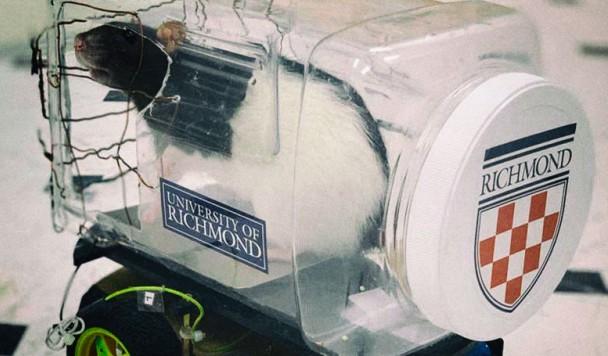 Ученые натренировали крыс водить крошечные автомобили