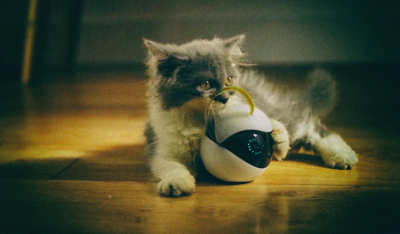 Автономный робот будет развлекать вашего кота, пока вы заняты