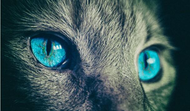 Ученые разрабатывают технологию, которая позволяет увидеть мир глазами животных