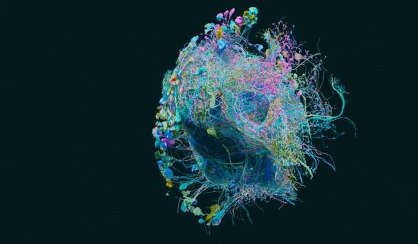 Google научился составлять подробные карты нейронов мозга