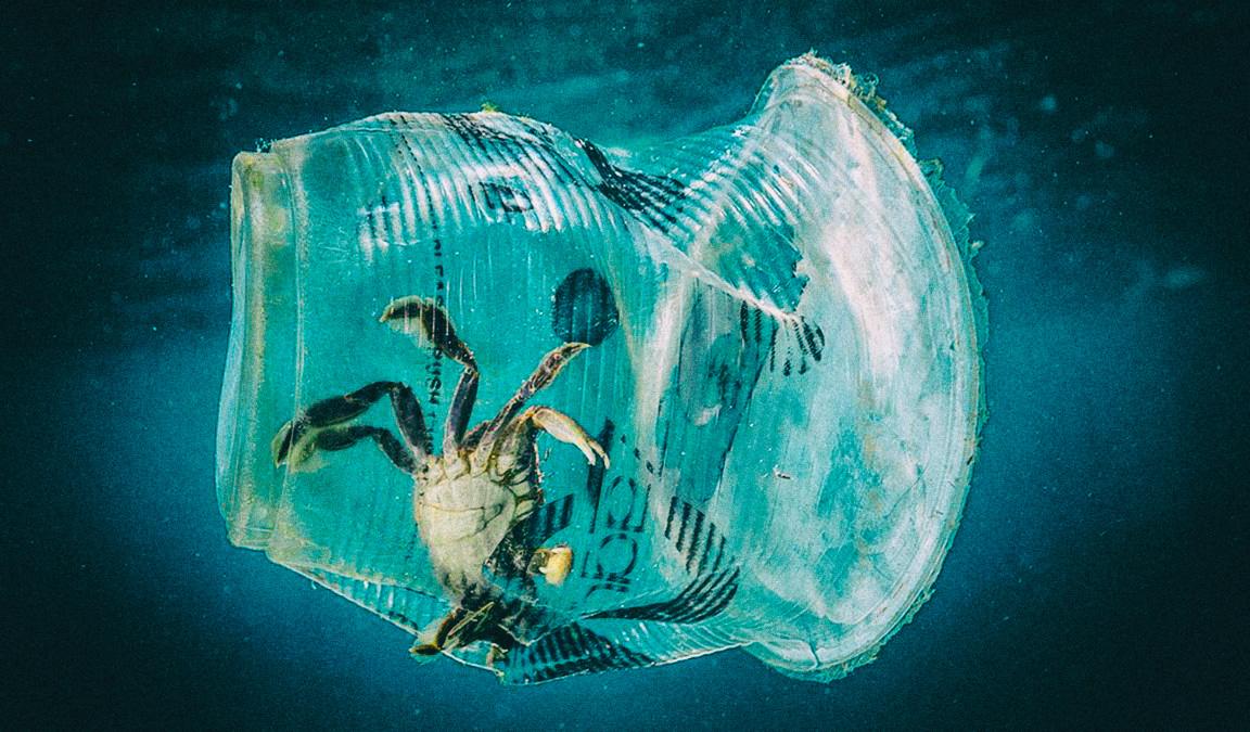 Создан растительный пластик, разлагающийся в океане