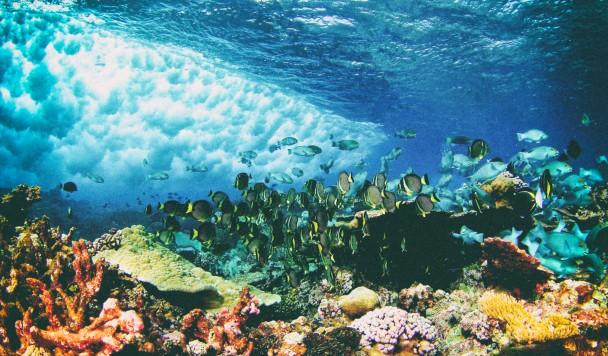 3D-печать может спасти экосистему коралловых рифов