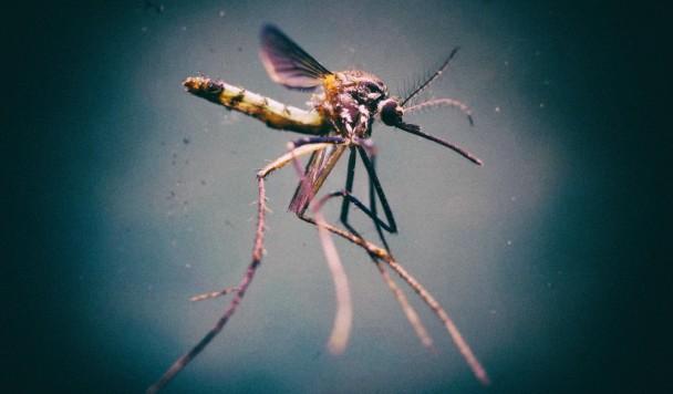 Комары помогли разработать новую противоаварийную систему для дронов