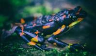 Исследование: Шестое массовое вымирание происходит быстрее, чем предполагалось