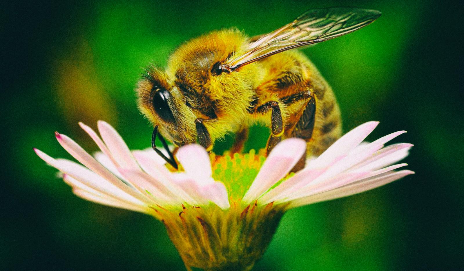 Эта технология спасет сельское хозяйство в случае гибели всех пчел