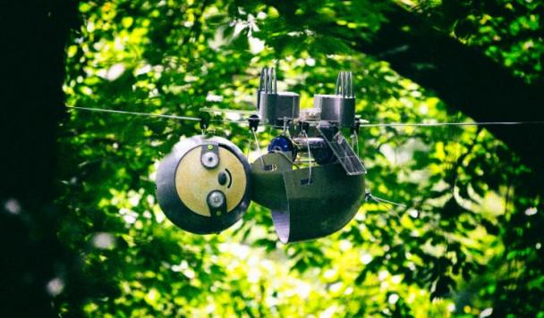 Робот-ленивец займется наблюдением за исчезающими видами
