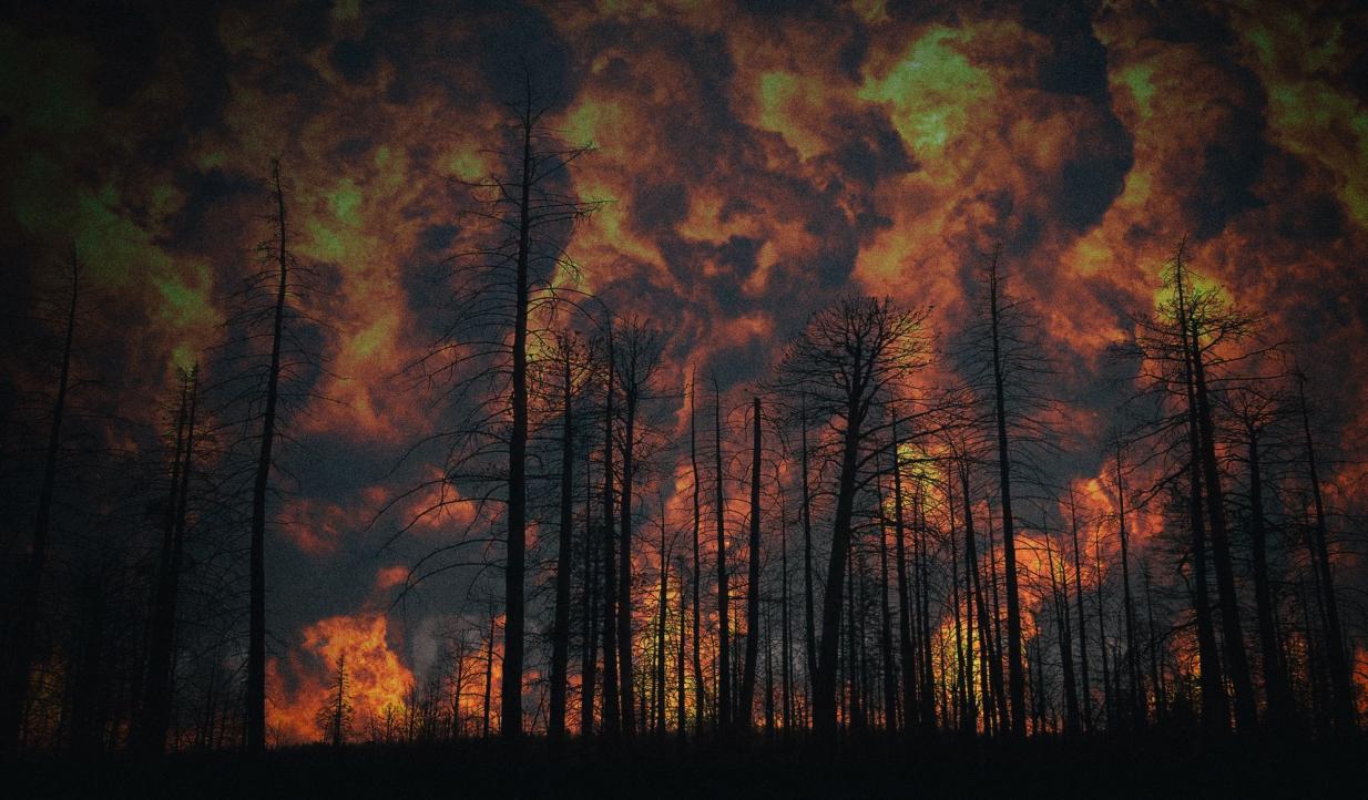 Детектор лесных пожаров получает энергию от качающихся деревьев