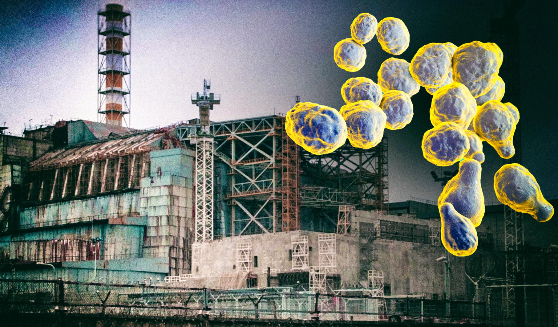 Грибок из Чернобыля поможет защитить людей от радиации в космосе