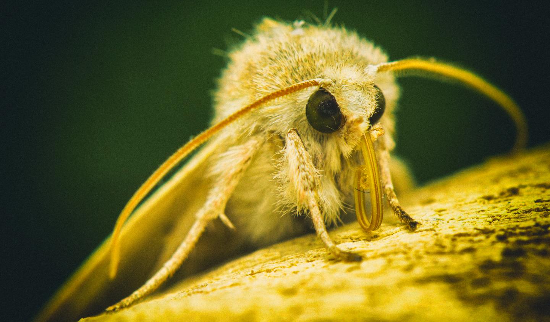 Глаза мотыльков помогут защитить самолеты от обледенения