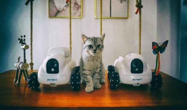 Робот Pumpkii использует сменные модули для развлечения домашних животных