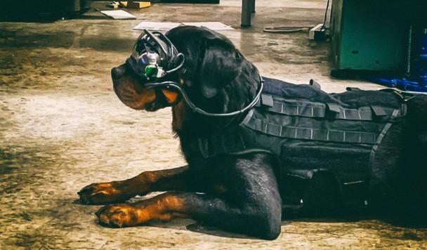 Армия США создает очки дополненной реальности для служебных собак