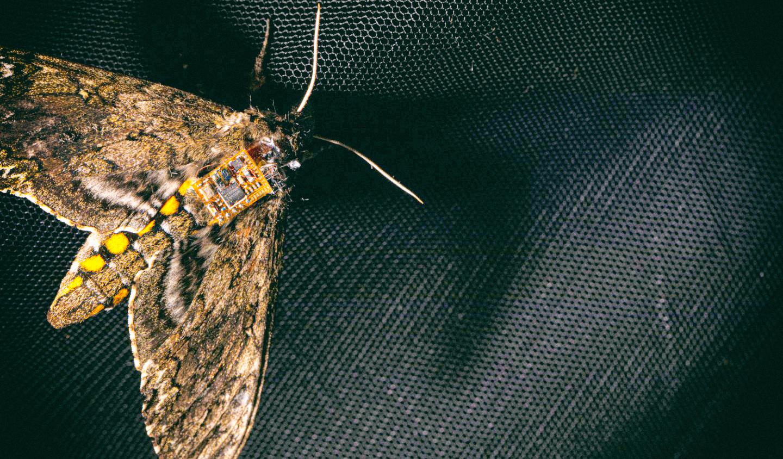 Крошечные климатические сенсоры могут уместиться на спине мотылька