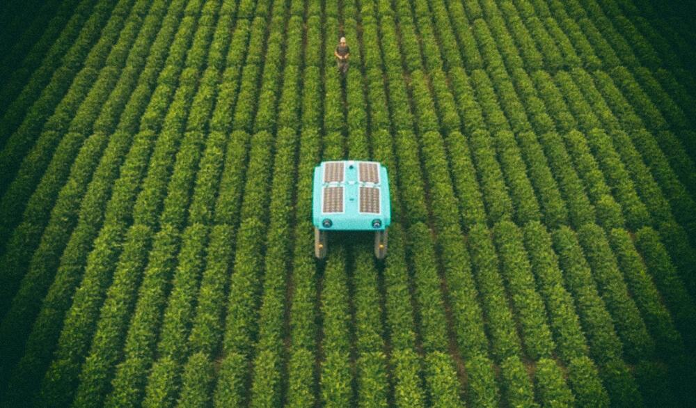 Google создает умных роботов для сельского хозяйства
