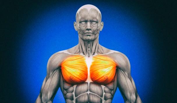 Найден способ укреплять мышцы при помощи магнитного поля