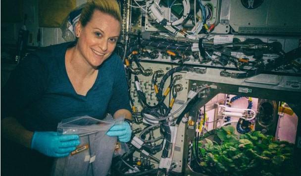 NASA позволило астронавтам съесть овощи, выращенные в космосе