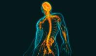 Искусственный белок позволяет восстанавливать разрушенный спинной мозг
