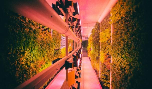 Как будут работать вертикальные фермы в супермаркетах Varus