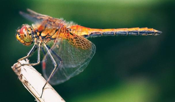 Как стрекозы помогут сделать дроны более безопасными