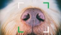 Новая биометрическая система узнает потерянных собак по носу