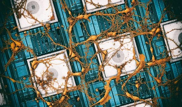 Samsung планирует скопировать структуру мозга на микрочип