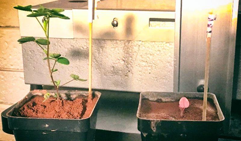 Бактерии помогут сделать марсианскую почву плодородной