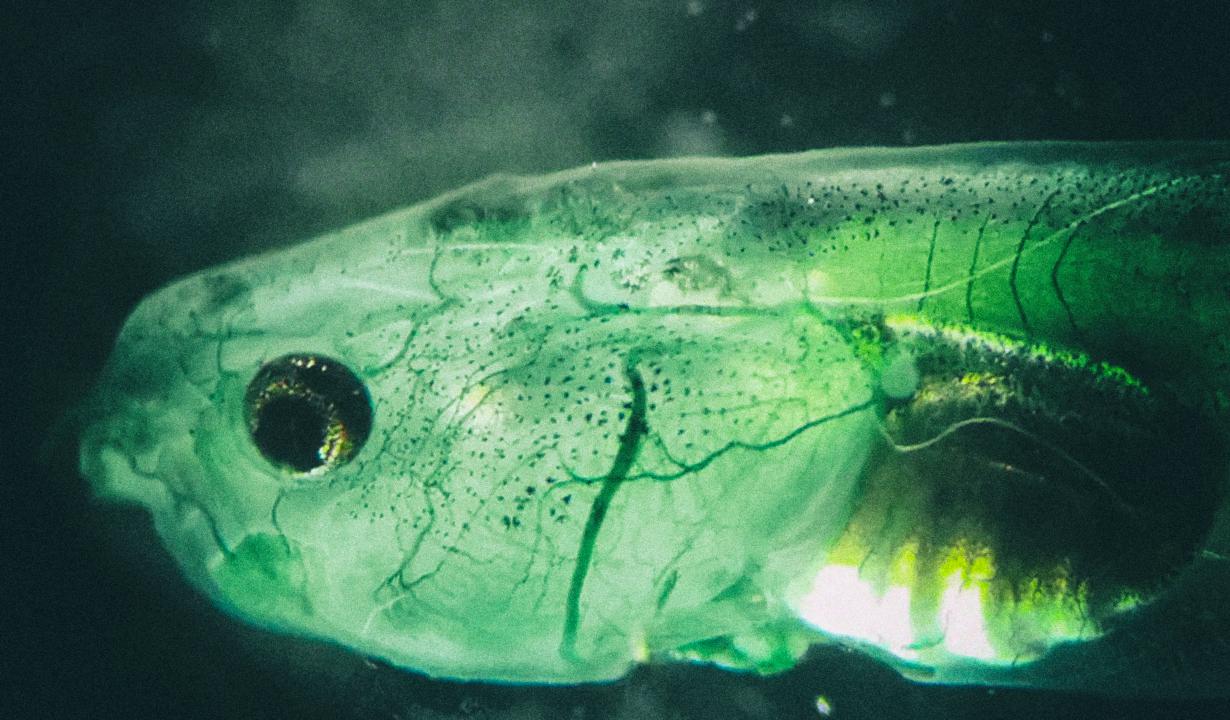 Ученые создали существо, которое не нуждается в дыхании