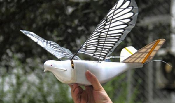 Китай создал шпионские беспилотники, неотличимые от голубей
