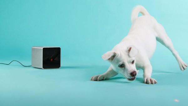 Украинский Petcube был признан лучшим устройство на Wearable Tech Show