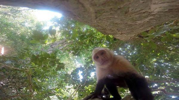 Обезьяны украли GoPro и сделали парочку селфи