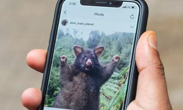 Пользователи Instagram могут скачать все личные фотографии одним файлом