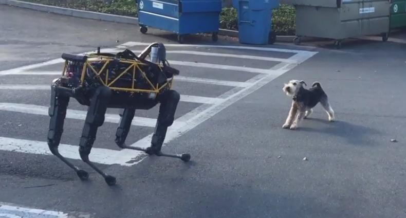 Основатель Google проверил, что будет, если стравить живую собаку и робота (Видео)